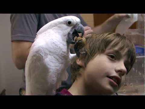 """An American Veterinary Medical Association video about """"Picking the Right Bird for a Pet,"""" featuring Dr. Peter S. Sakas."""