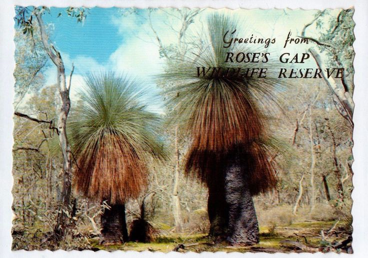 C3452cgt Australia Grass Trees Grampians Roses Gap Wildlife Park Greeti postcard | eBay