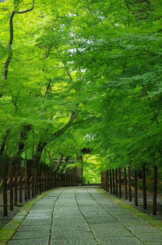 Path of fresh green - Komyo-ji Temple, Nagaokakyo, Kyoto, Japan