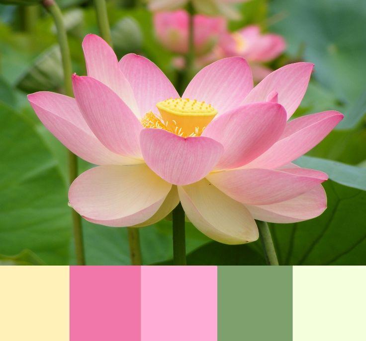 Spring Pink Palette