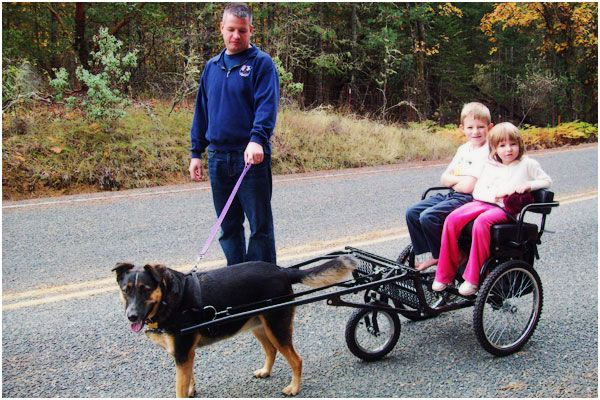 How To Build And Train A Cart Pulling Dog
