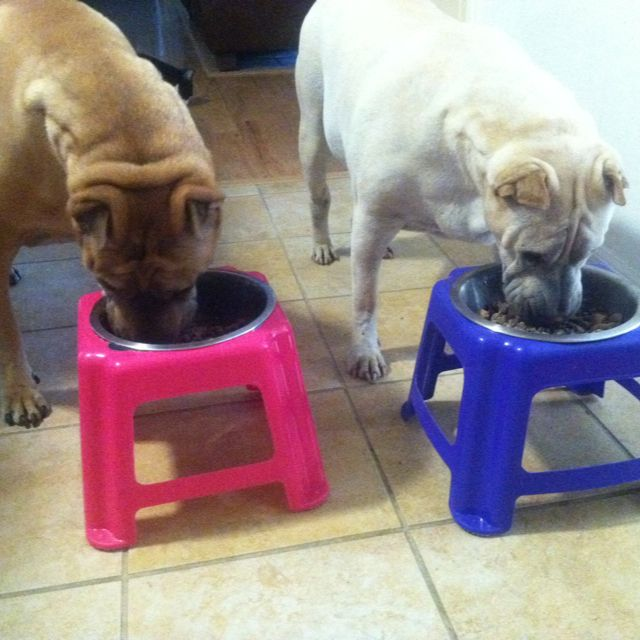 Elevated dog bowls from step stools - I like this idea better with wooden stools, but still a cute idea!!!