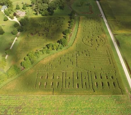 Indiana Corn Maze 2016 Presidential Election Themed featuring the White House, American Flag, and Get Out and Vote.
