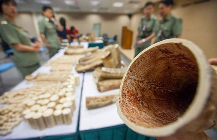 Alex Hofford/WildAid News: Recent Spike in Large Seizures of Ivory, Rhino Horn, Pangolin Scales