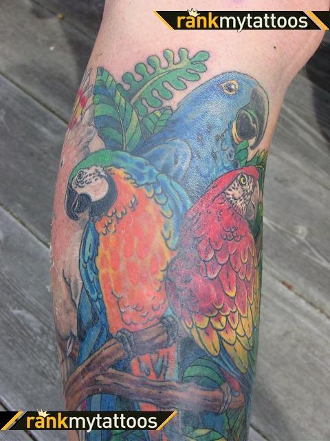 bird tattoo design macaw parrot bird tattoos pinterest tattoo designs tree bird tattoo. Black Bedroom Furniture Sets. Home Design Ideas