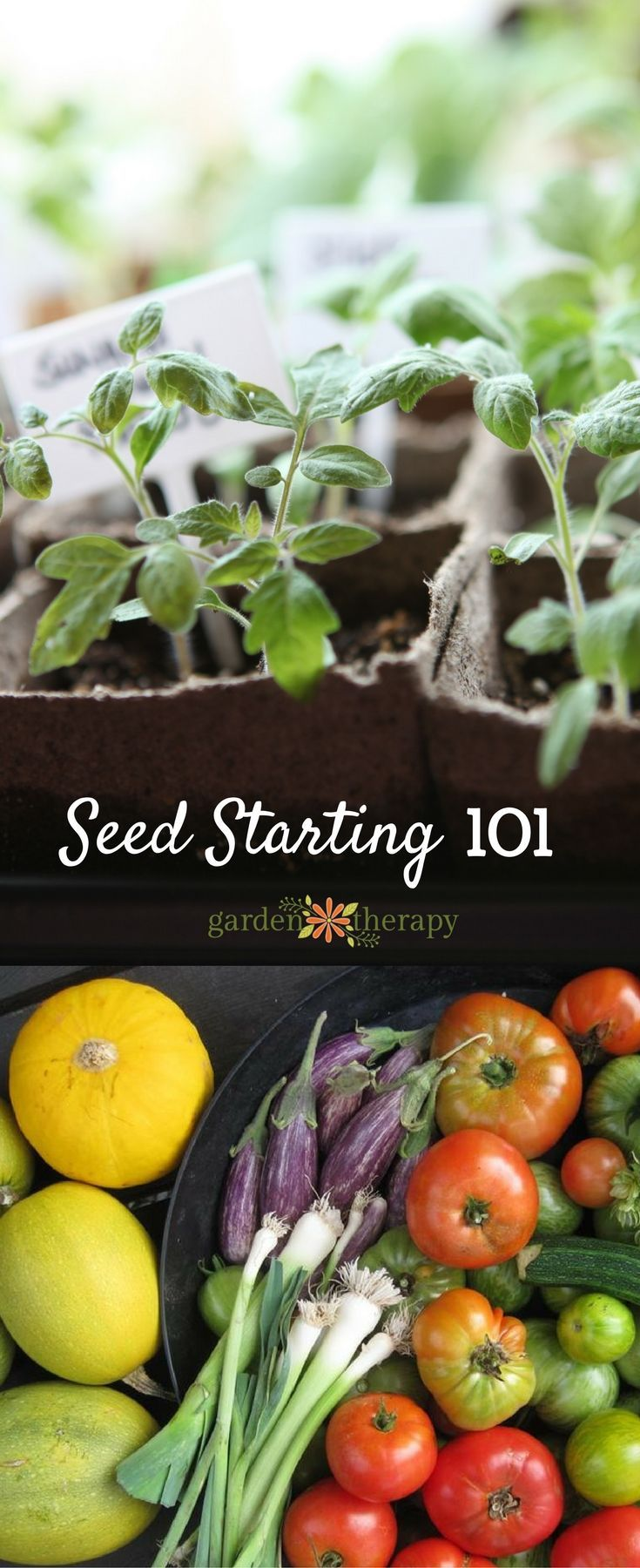 Seed starting 101 the basics for home seed starting #gardentrends #gardentherapy #gardentherapyseeds #seeds #seedstarting #growyourown #gardening