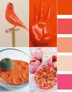Spring Summer 2016 Color Trends from the Trend Council