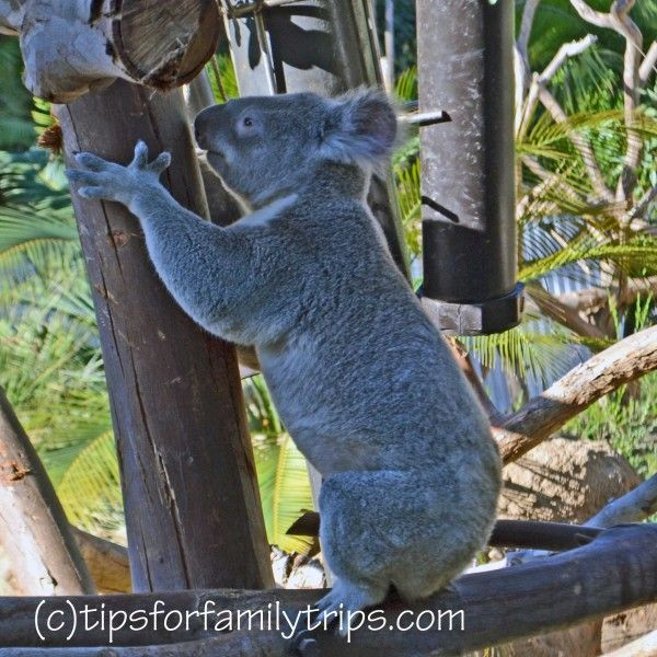 7 Tips for visiting the San Diego Zoo