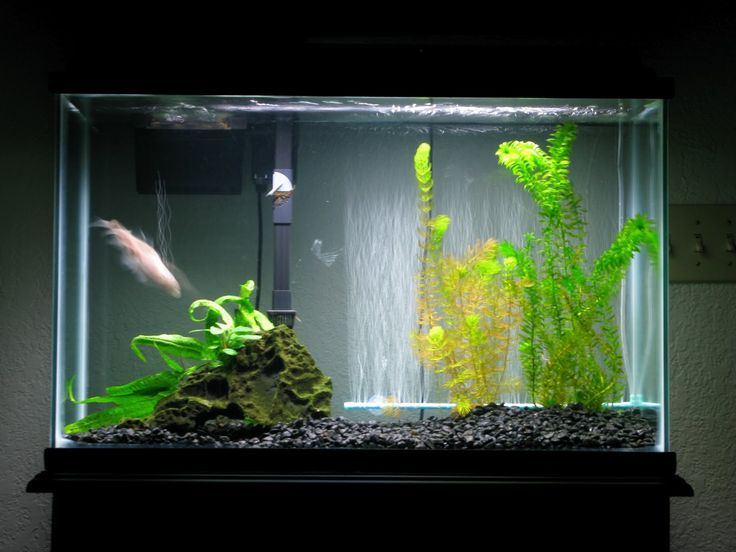 1000 images about betta tanks on pinterest betta fish for 2 gallon betta fish tank