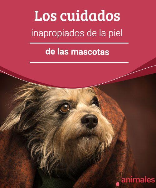 Los cuidados inapropiados de la piel de las mascotas  Existen algunos mitos que pueden llegar a ser nocivos para tus animales, te hablamos un poco de los cuidados inapropiados de la piel de las mascotas. #piel #mascota #cuidados #nocivo