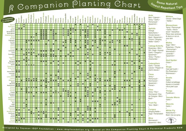 A free companion planting guide to 67 plants, herbs and trees + companion panting chart