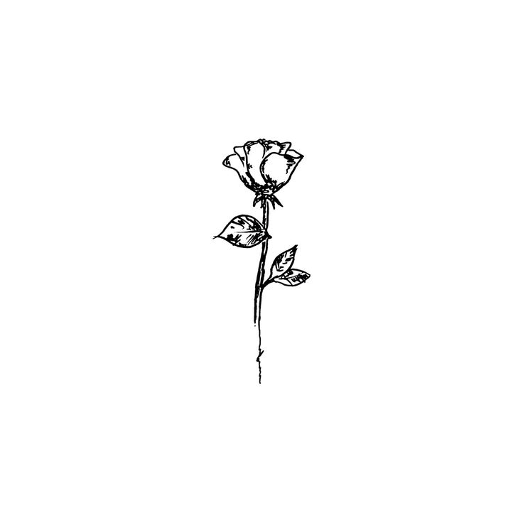 rose. Wildflower minimalsit