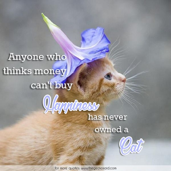 Anyone who thinks money can't buy happiness has never owned a cat.  #animals #anyone #buy #cat #happiness #money #never #owned #quotes #thinks
