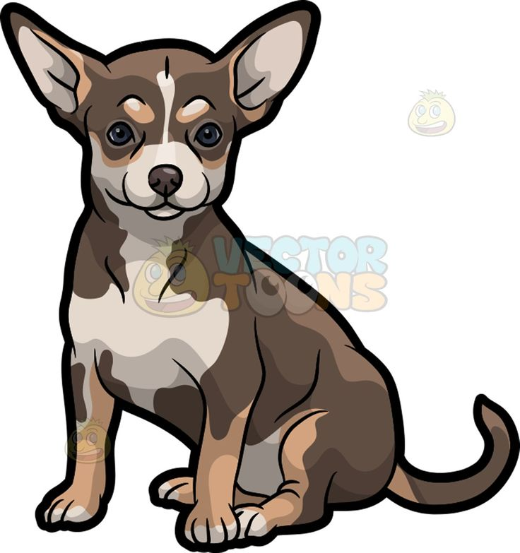 An Adorable Chihuahua Chihuahuas, Posts and Eyes