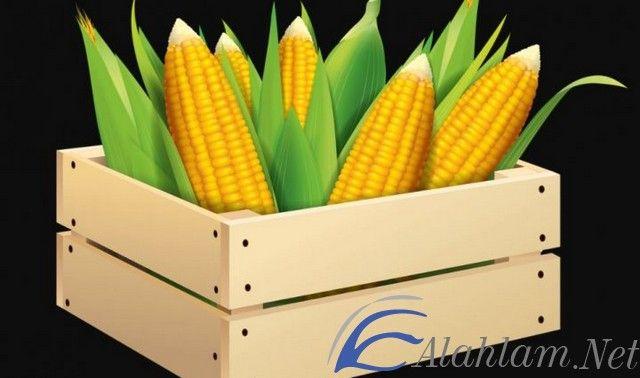 تفسير حلم الذرة في المنام للعصيمي الذرة في الحلم الذرة في المنام تفسير حلم الذرة حلم الذرة Vegetables Corn Food