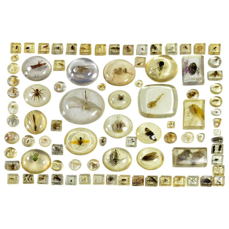 Large Collection of Resin Incased Insect Specimens | From a unique collection of antique and modern curiosities at https://www.1stdibs.com/furniture/more-furniture-collectibles/curiosities/