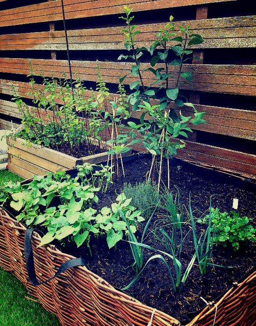 Eigen Moestuin inclusief fruitboom en -struiken. Own herbs and fruit trees.