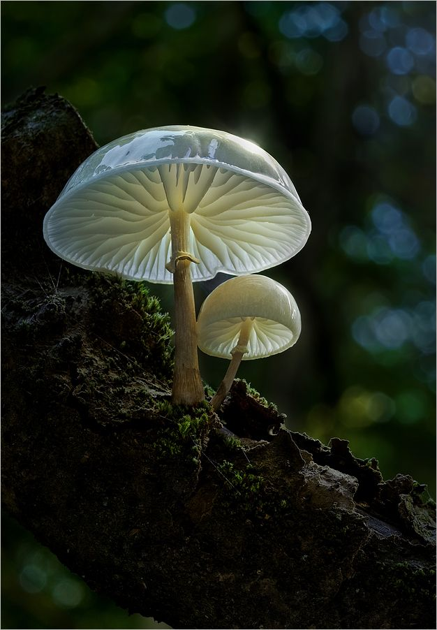 for the faeries ❧ Fairy Tale von Moonshroom. The Porceline Mushrooms