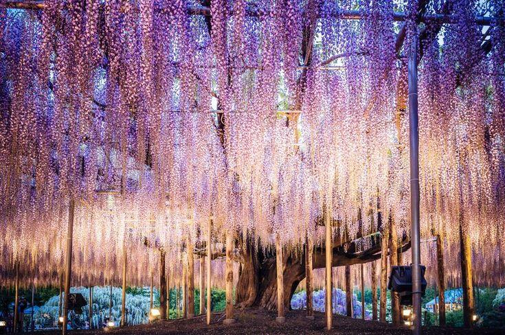 L'albero della Vita di Avatar esiste e si trova in Giappone - Corriere.it