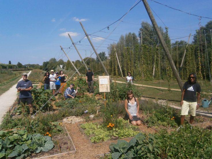 À proximité des campus, des « maisons de l'étudiant » ou des résidences du Crous, les projets de jardins partagés, basés sur des démarches solidaires et (...)