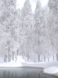 Winter White Nature