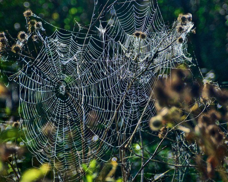 Webs by Elena Stuukstly Kozyryatskaya on 500px