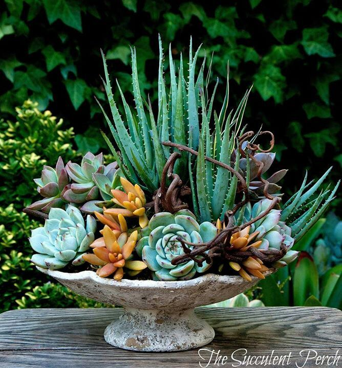 Beautiful succulent planting in a lovely old bowl