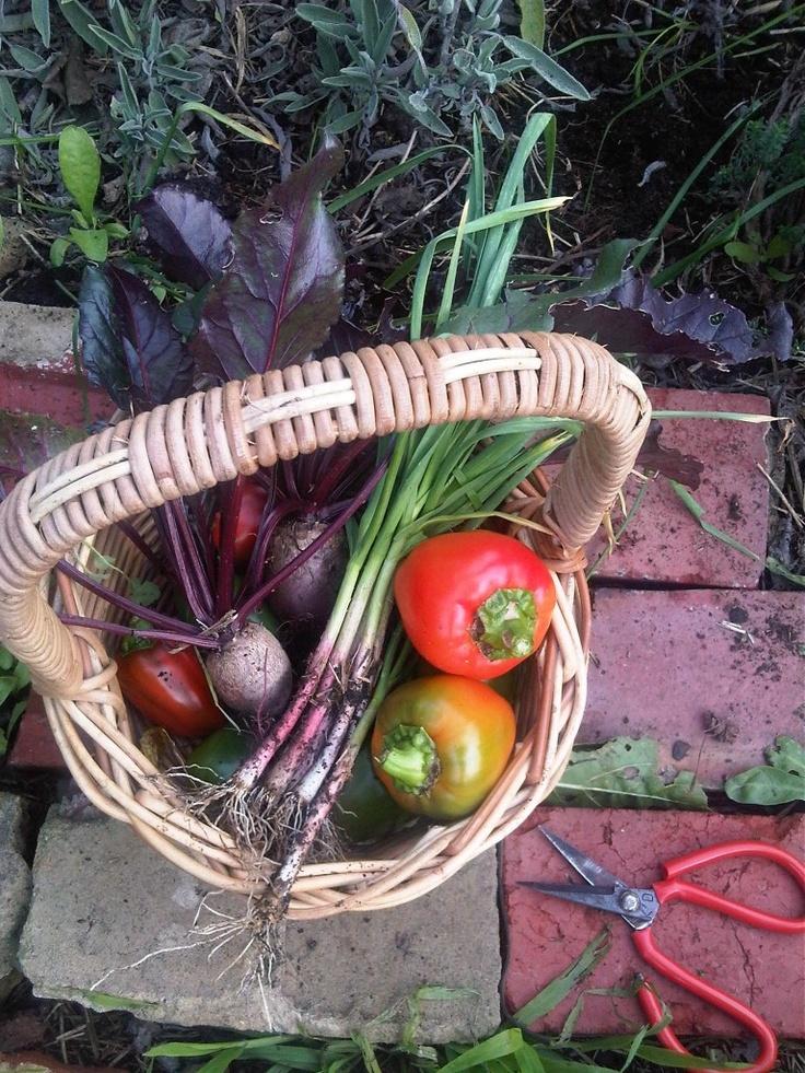 Organic Vegetables from Kemi's garden.   Kemi, based in Melbourne, Australia, creates wonderful raw fruit & vegetable recipes.  Visit her website @ http://kemisrawkitchen.com.au/blog/