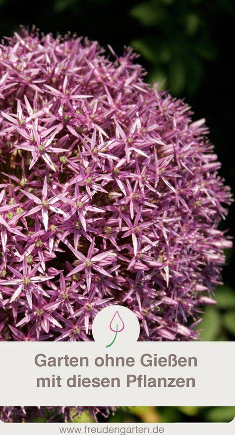 Pflanzen für trockene und sonnige Standorte   Garten ...