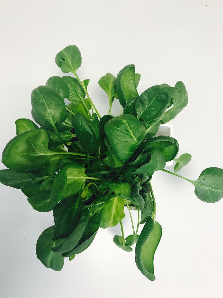 Powerfull Spinach I Pinaattia habaan!