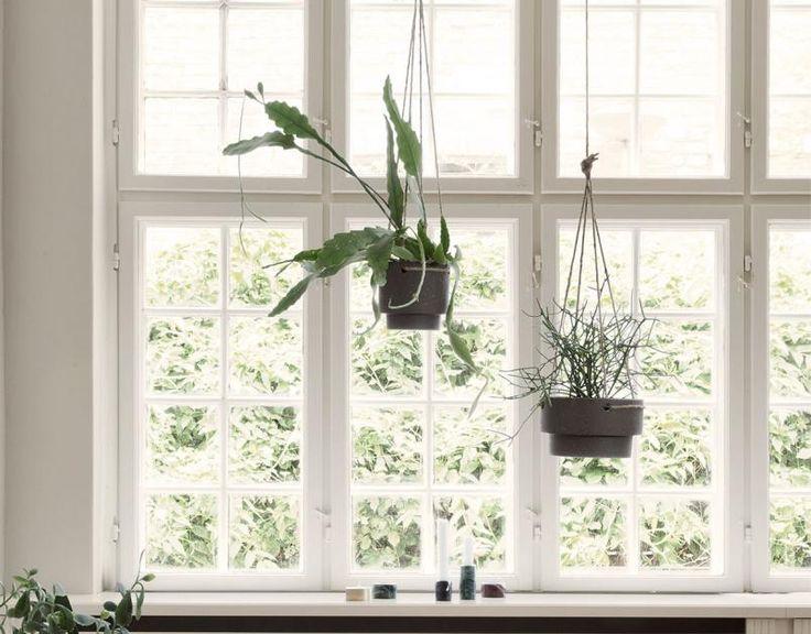 Pflanzen In Die Fensterbank Stellen Kann Jeder. Deswegen Lassen Wir Sie  Jetzt Als Fensterdeko An