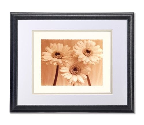 Rain Drops on Three Daisy Flowers Close Up Photo Wall Picture W/V Matted Framed Art Print, Black