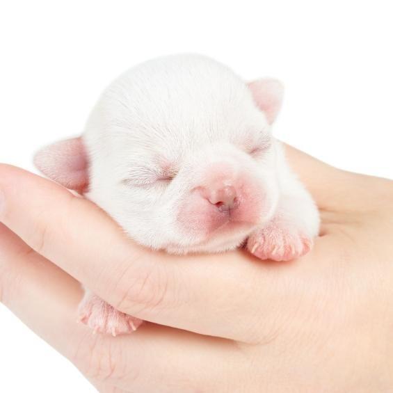 Cuidados para perros recién nacidos  #ExpertoAnimal #MundoAnimal #ReinoAnimal #Animales #Naturaleza #AnimalesTiernos #Ternura #Perros #ReciénNacidos