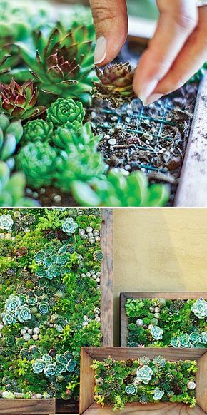 1000+ images about Succulents on Pinterest | Agaves, Succulents ...