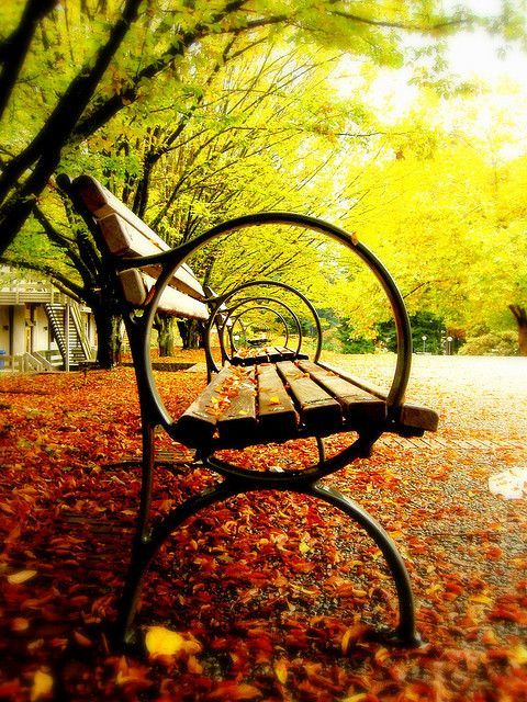 18 best park bench images on pinterest park benches benches and