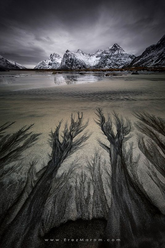 "Torment - Incredible black and white sand patterns in Skagsanden beach. These 'trees' resembled the hands of tormented souls in the inferno! If you'd like to join me and shoot these amazing locations yourself, from the ground and from the air, check out my '<a href=""https://www.erezmarom."
