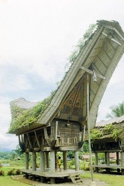 The Batak Toba tribe, which lives in Sumatra, Indonesia, once had a ritualistic society; the villages were composed of many of these boat-like houses,   The steeply pitched thatched saddle roof protected living areas; the eaves were intricately carved with ritualistic symbols; and the entrance was a trapdoor at the top of a stairway.