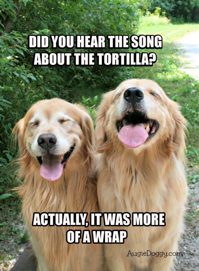 Funny Golden Retriever Tortilla Joke Meme Postcard ...