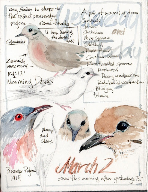 Mourning dove sketch with watercolor.  I love listening to their sweet call.  #journal #art #sketch #bird