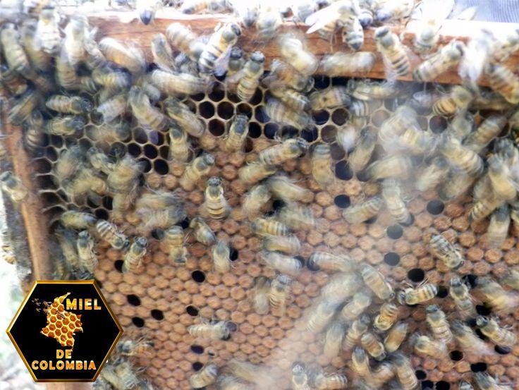 Aprende los patrones de vuelo de la abeja antes de elegir el lugar de la colmena. Coloca las colmenas en centros que fomenten patrones de vuelo que lleven a las abejas lejos de vecinos y animales domésticos.