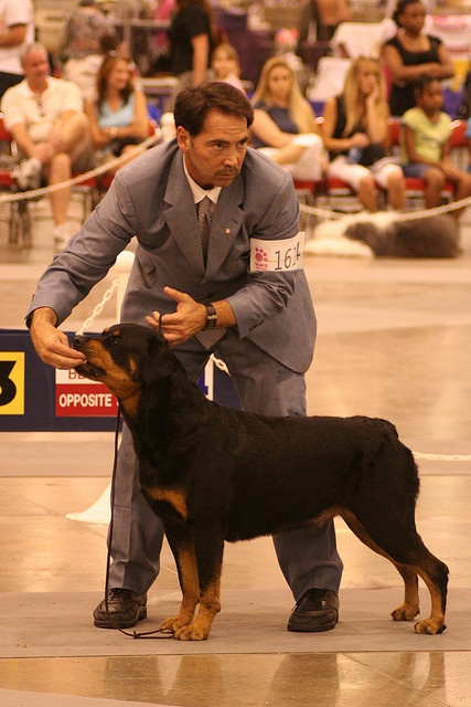 #Rottweiler #breed #competition at the Reliant Arena American Kennel Club World Series Dog Show July 23, 2006.