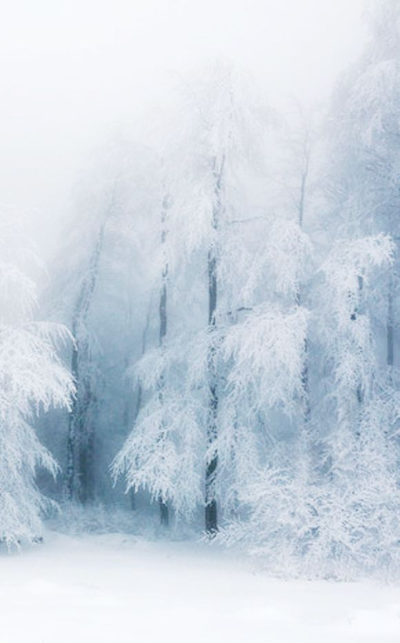 snow | forest | trees | white | blue | winter