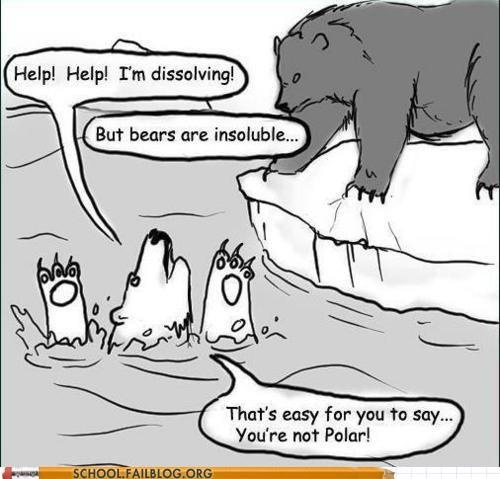 Lol polar bear