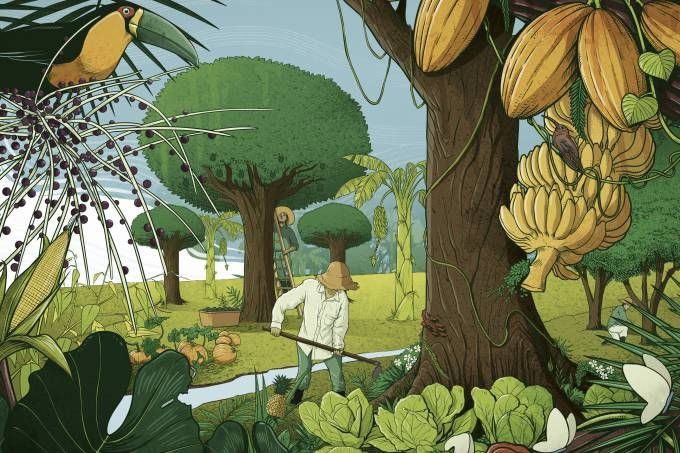 Como a agrofloresta, uma técnica de agricultura que copia a natureza, sem o uso de venenos ou fertilizantes, pode frear as mudanças climáticas, recuperar ecossistemas, libertar mulheres e acabar co…