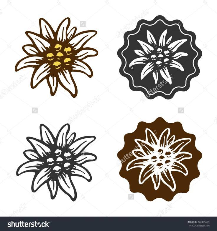 Edelweiss Flower Tattoo Edelweiss Flower Symbol Alpinism Alps Germany Logo Stock Vector