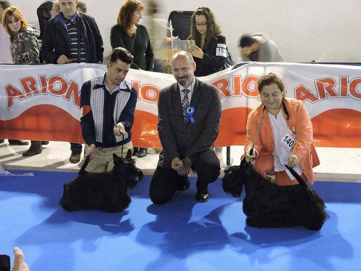 Terrier Special Show in Valls (Spain) 24.10.2015.