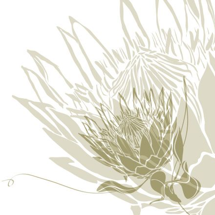 protea drawing - Google Search