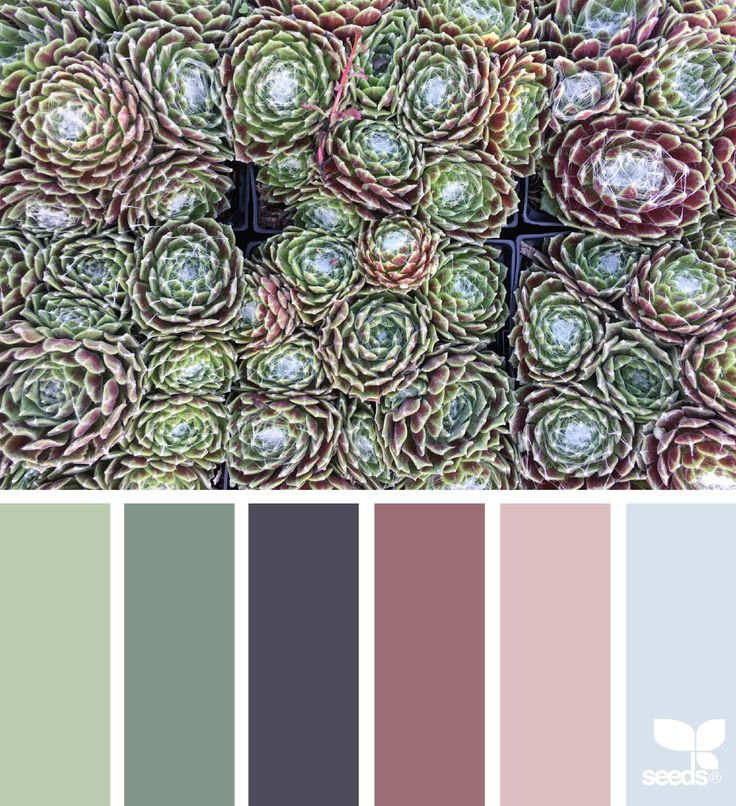 { succulent hues } image via: @suertj #color #colorpalette #color #palette #pallet #colour #colourpalette #design #seeds #designseeds