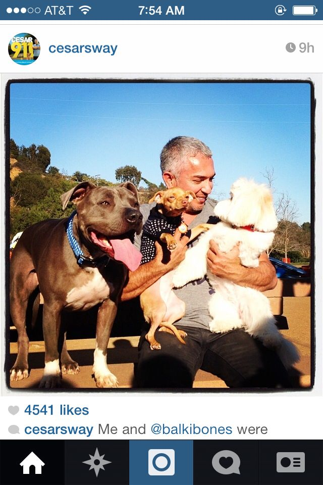 Cesar Millan and this white fluffy dog look like Cesar(s).
