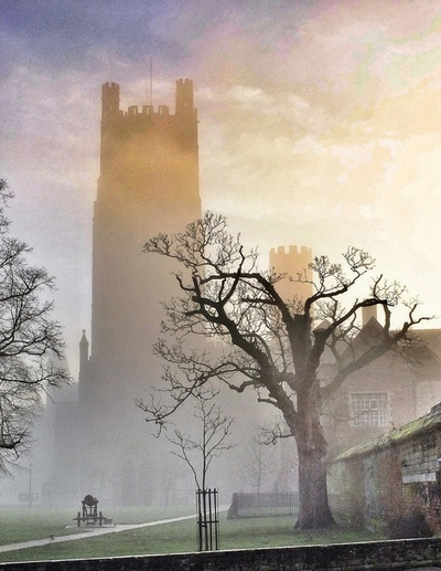Old and young tree by Ely Cathedral, England
